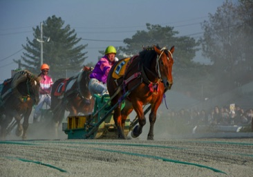 Ban'ei - Balap Kuda Paling Lambat Dari Jepang